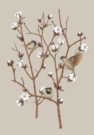 sparrows-duo-final-02-xs.jpg