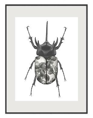 beetle-detail-01.jpg