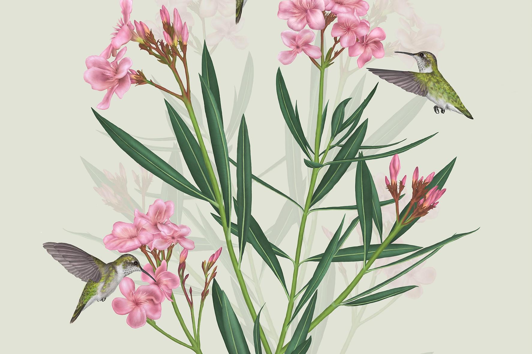 oleander-kolibriky-03.jpg