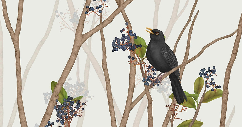 BLACKBIRD ON BLACK ROWAN