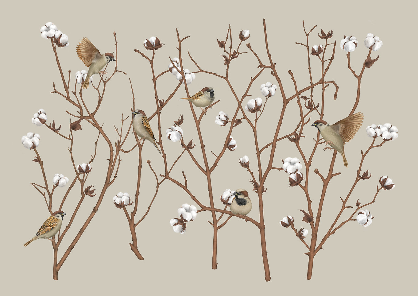 sparrows-on-cotton-plant-final-xs.jpg