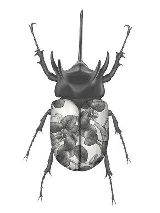 beetle-final-xs.jpg