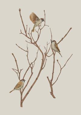 sparrows-on-twig-finaaal-xs.jpg