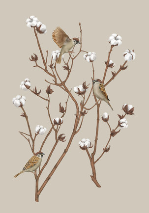 sparrows-duo-final-01-xs.jpg