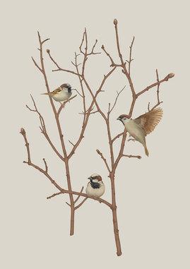 sparrows-on-twig-02-xs.jpg