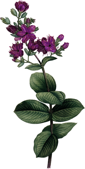 floral_0002_3.png