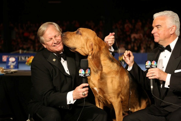 THE NATIONAL DOG SHOW PRESENTED BY PURINA -- 2015 -- Pictured: (l-r) Host David Frei, 2014 winner Nathan the bloodhound, host John O'Hurley -- (Photo by: Bill McCay/NBC)