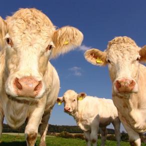 חלב הזהב - מה קרה לחלב שלנו? + מתכונים