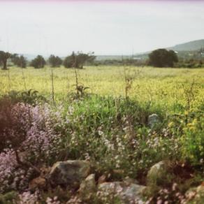 האביב - התנהלות בריאה על פי האיורוודה