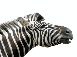 Deu Zebra! BIG DATA, Marketing e Tecnologia.