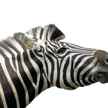 Deu Zebra! BIG DATA, Marketing e Tecnologia.