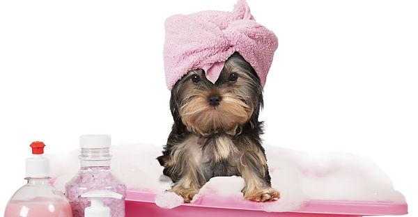 dog-grooming-pic-w1000h500.jpg