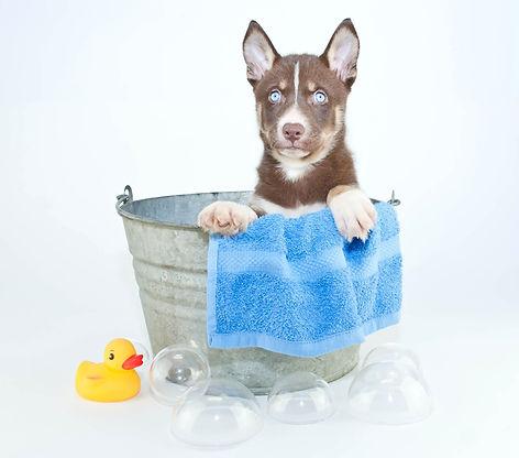 pet_grooming_services.jpg