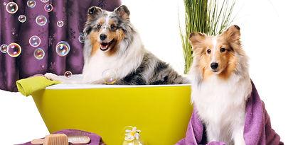 dog-grooming-e1478283119973.jpg