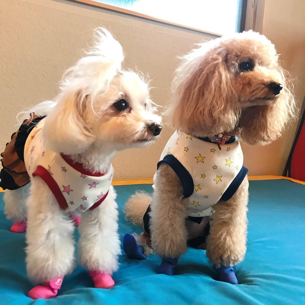 SMC+workKYOTO犬服教室