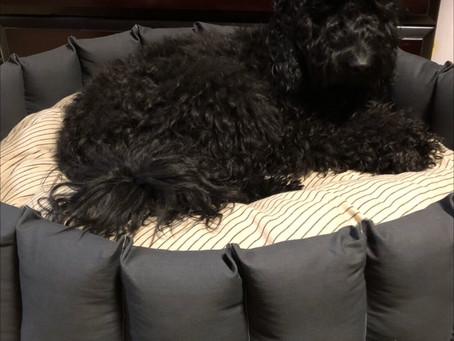 ☆【京都犬服教室】1dayLESSON 特大ベッド完成!☆