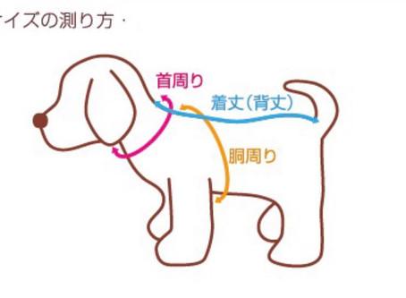 ☆犬服教室 わんちゃんのサイズの測り方☆