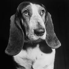 Morgan - the first dog