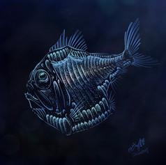 Hatchet fish 銀斧魚