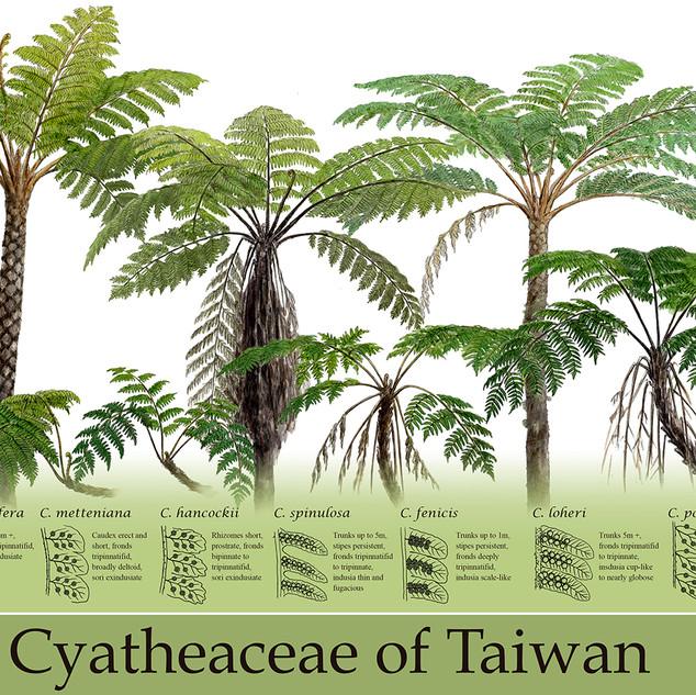 Cyatheaceae of Taiwan