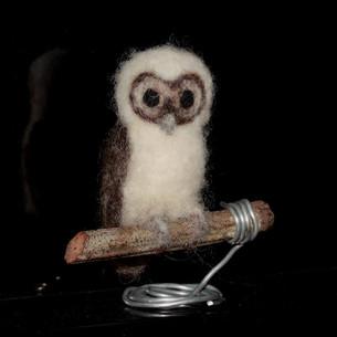 Juvenile brown wood owl, Strix leptogrammica
