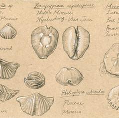 化石蒐藏 Some of my fossil collections