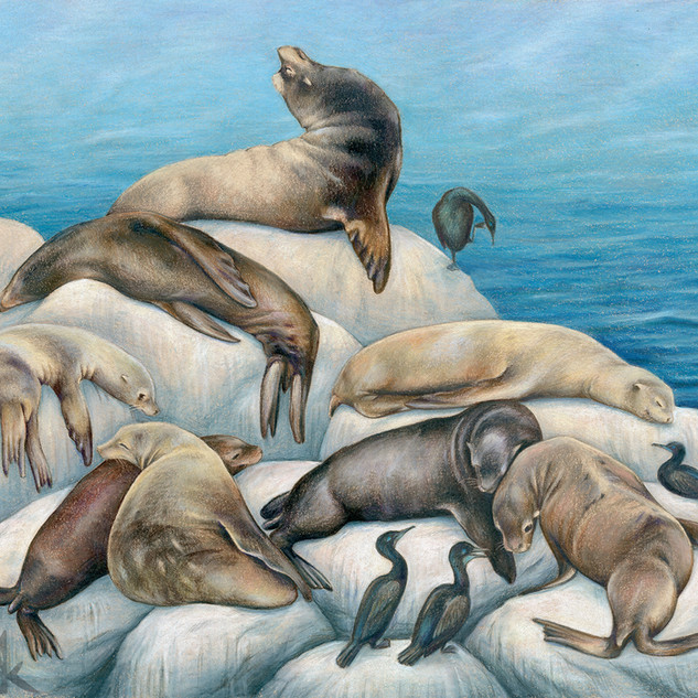 Sea lions and their marshmallow pillows