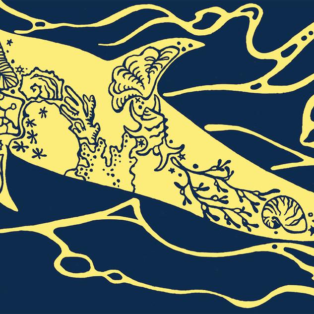 花紋海豚 Risso's dolphin