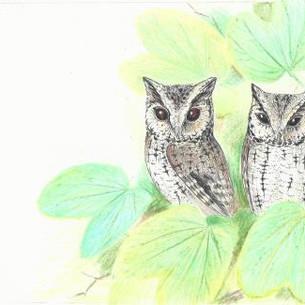 Indian scops owl, Otus bakkamoena
