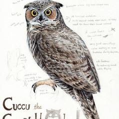 Cuccu the great horned owl