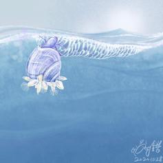 Violet snail紫螺
