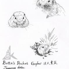 Botta's pocket gopher