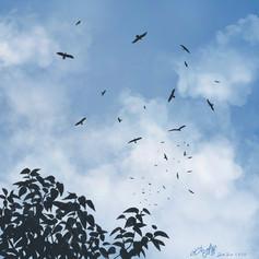 Migrating raptors 國慶賞鷹