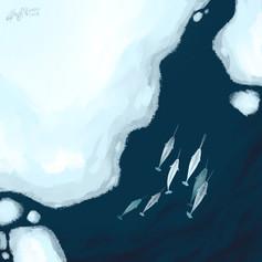 Narwhals 一角鯨