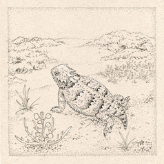 Horned lizard 角蜥