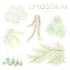 Mosses 苔