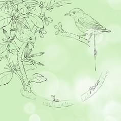 啄花與桑寄生