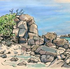 風稜石與白水木