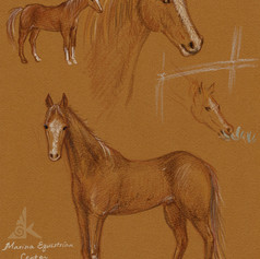 Marina Equestrian center