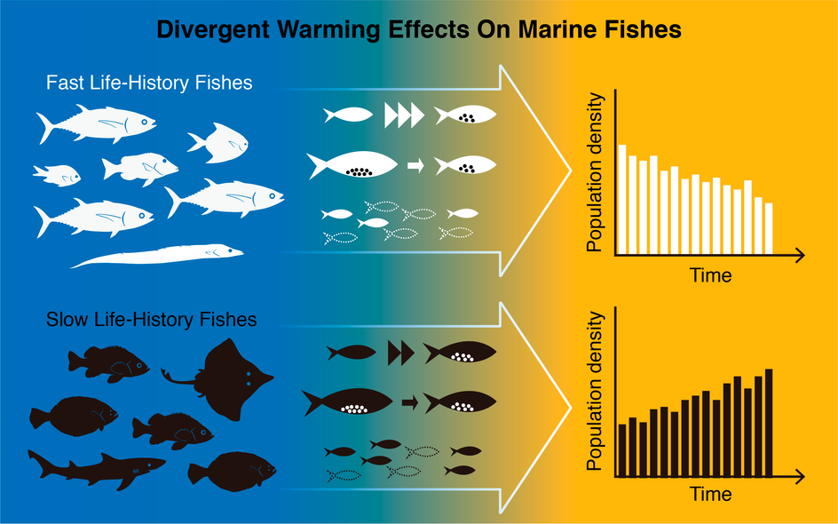 Divergent Warming Effects on Marine Fishes