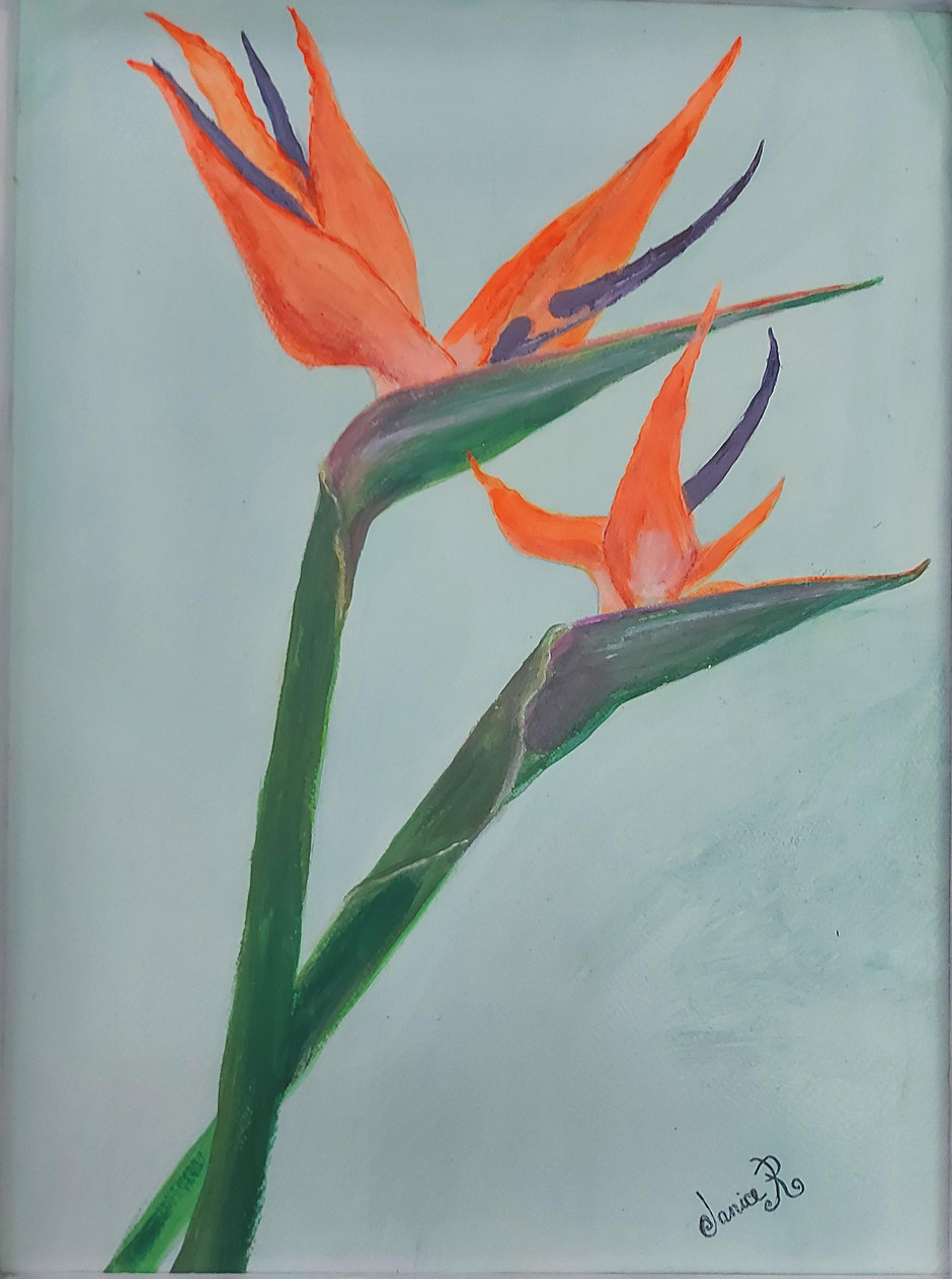 Janice Richardson 'My Bird Of Paradise'