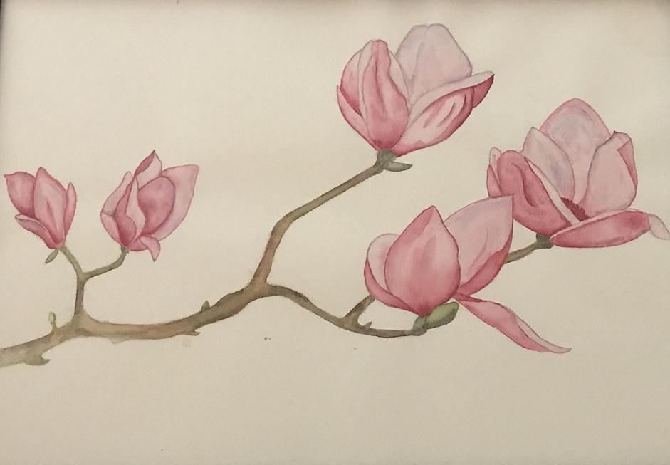 Cami Plum 'My Grandmother's Garden'