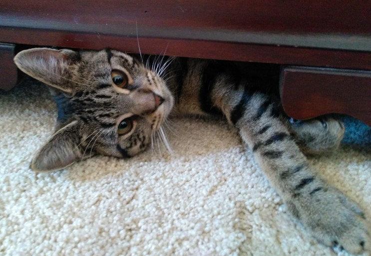 tigger under dresser.jpg