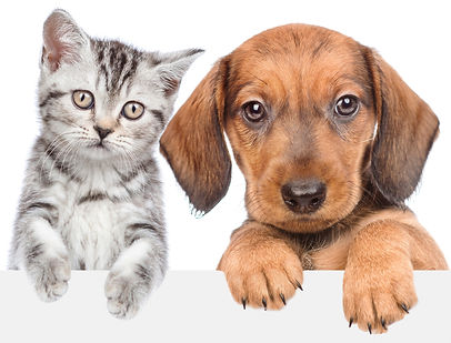 Cat and dog over white banner_edited.jpg