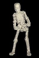 skeleton-1654869.png