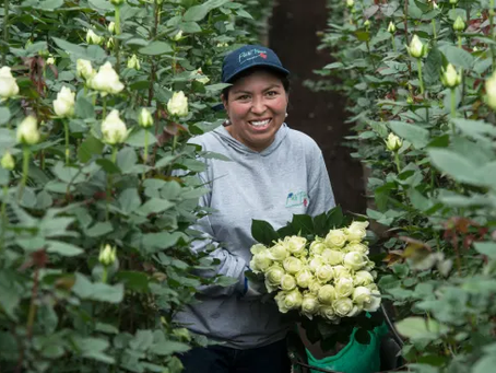 Mit Fairtrtrade Blumen ein Zeichen setzen.