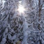Laurentian_Winter_22_of_30-150x150
