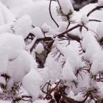 Laurentian_Winter_16_of_30-150x150