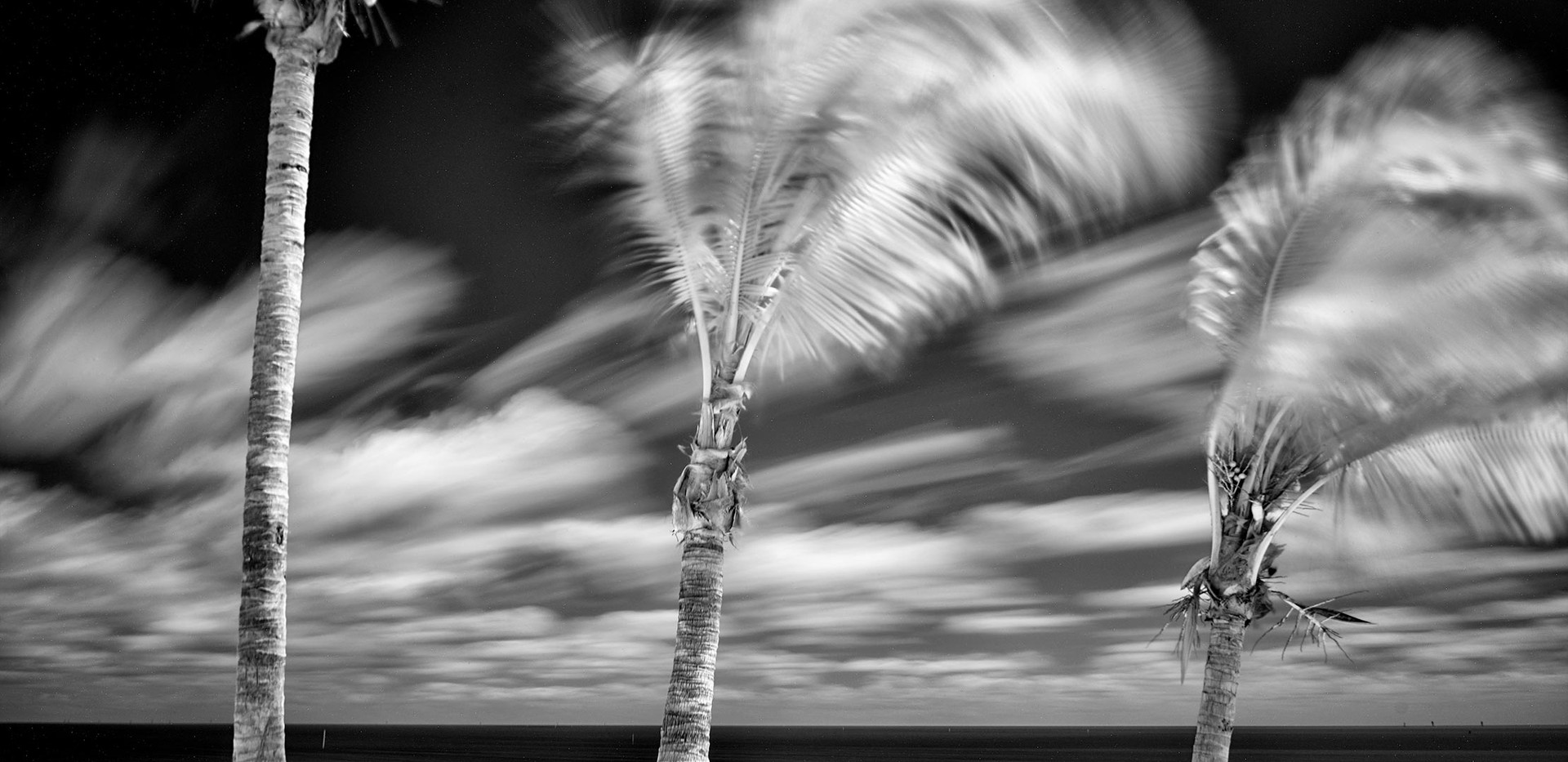Palm Trees in Infrared