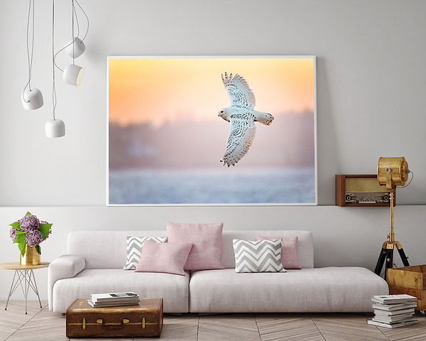 White Couch Pink Flowers Snowy Owl.jpg